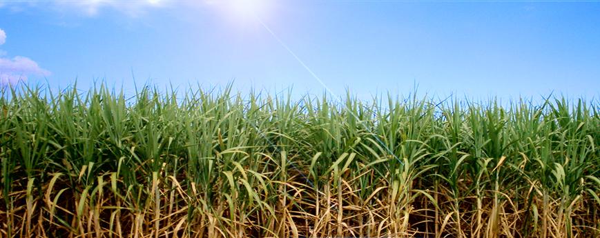 Importancia de la Investigación Agroindustrial