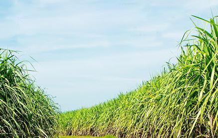 ANCAP, a través de ALUR, presentó plan quinquenal de sustentabilidad en Bella Unión